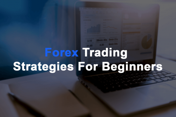 Forex Trading Strategies for Beginners Daily Price Action
